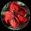broszka filcowa kwiat czerwony